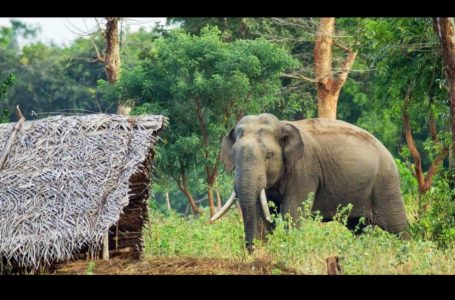 The policy pursued so far to prevent human-elephant conflict needs to be changed urgently – COPA Committee report recommends